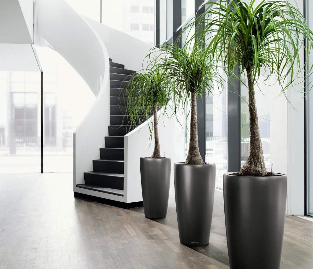 Arredare l'ingresso con le piante