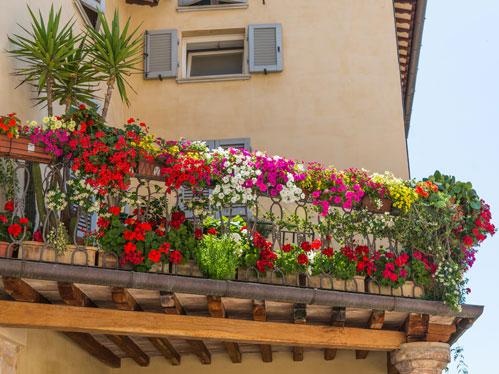 Arredare la casa con le piante - Global Services Immobiliari