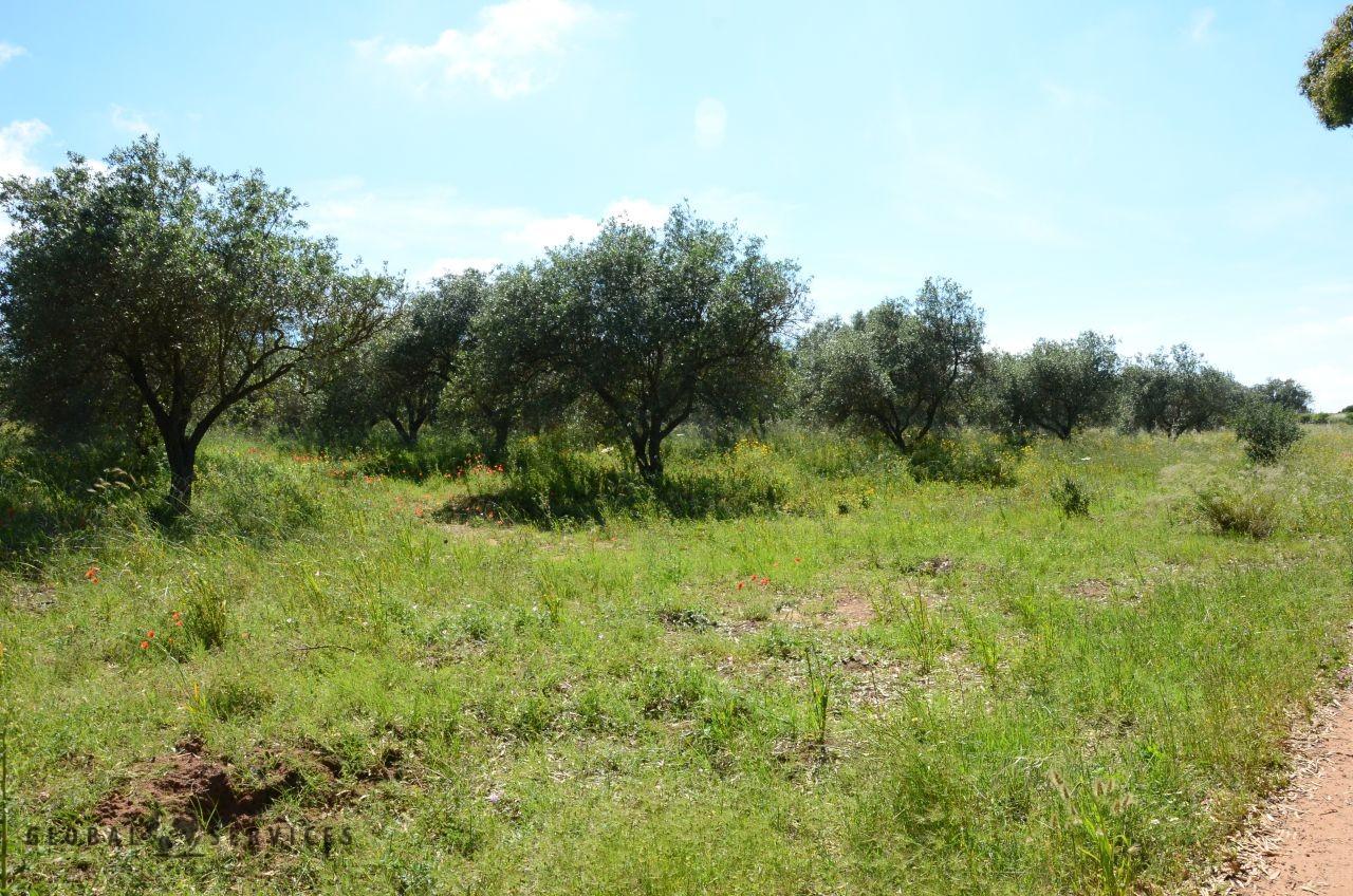 Terreno con Rudere Civile Abitazione vendita Alghero