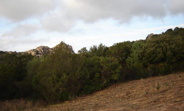 Parte del Campo